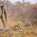 A 'Game Changer' For Elephants