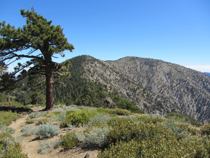 Straight outta Wrightwood… Mt. Burnham, named after you-know-who.